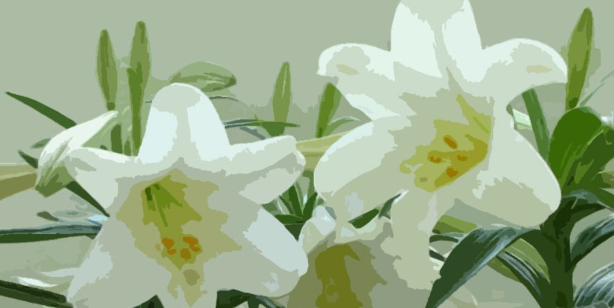 Easter Lily Orders in Memory/Honor Due on March 25